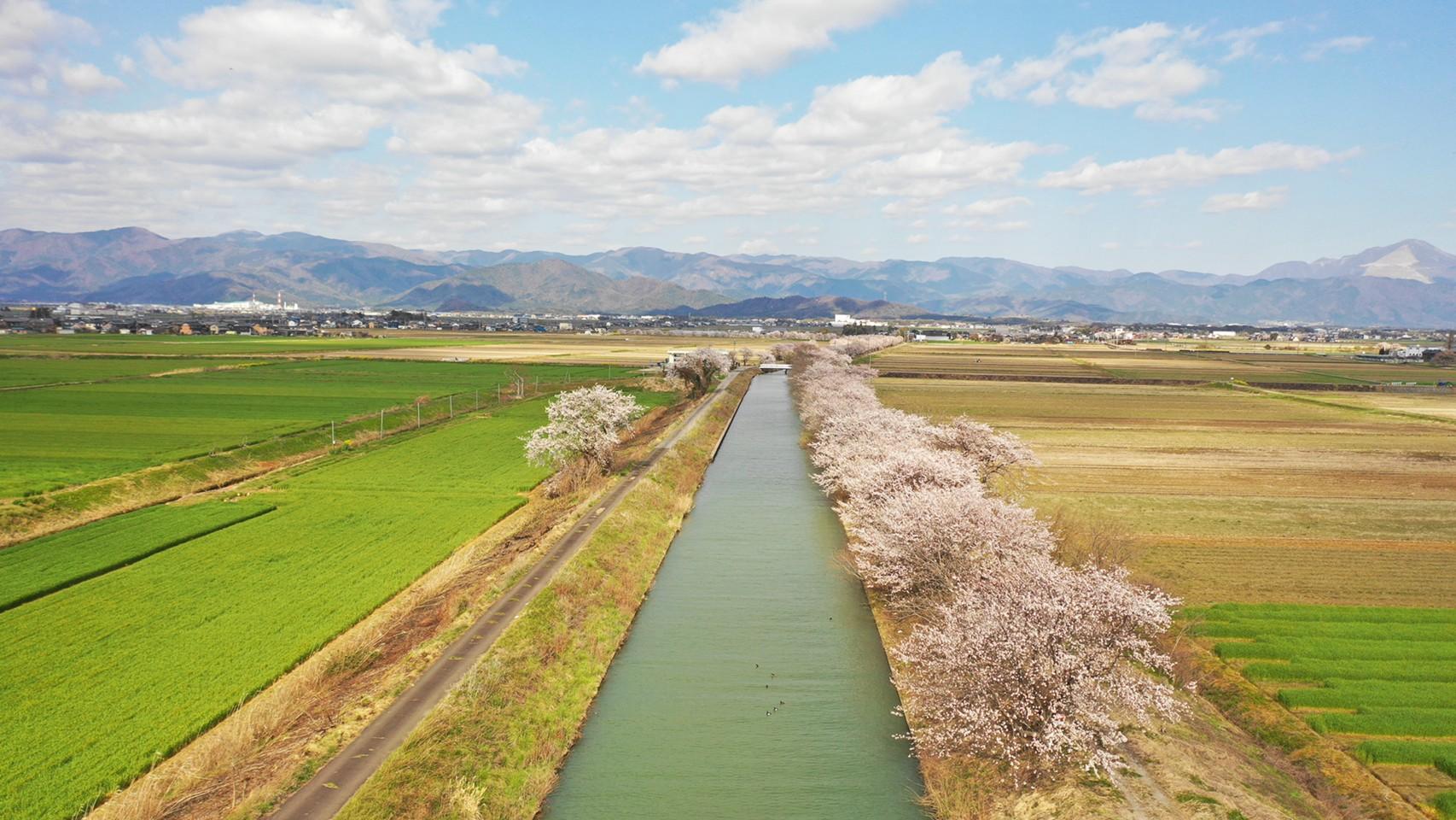 【長浜市】『丁野木川:ちょうのぎがわ』の写真スポット
