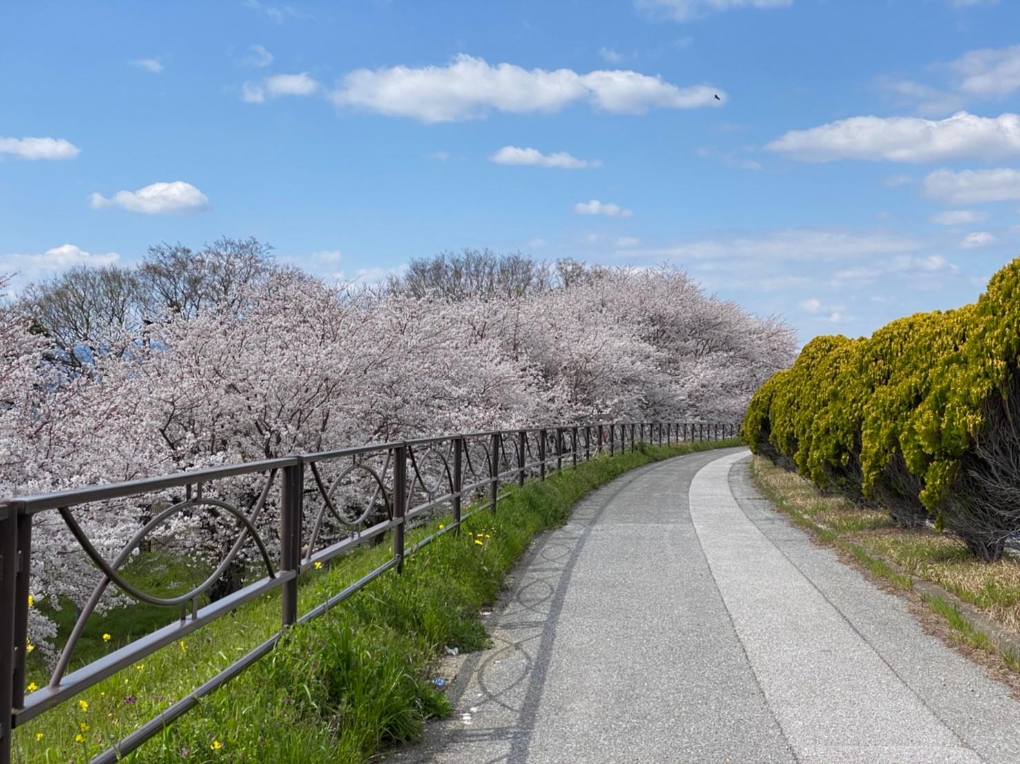【長浜市】『姉川大橋:あねがわおおはし』の写真スポット