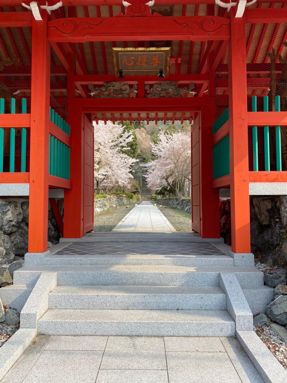 【高島市】『青蓮山 酒波寺』の駐車場・写真スポットガイド