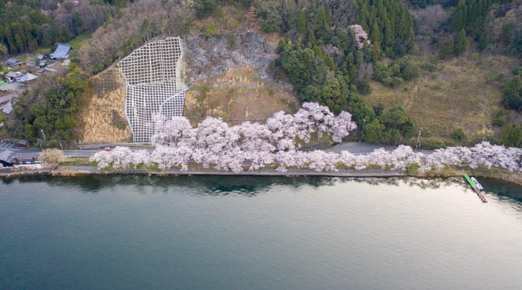 【桜の超名所】『海津大崎湖岸園地』のアウトドア情報(駐車場・釣り)