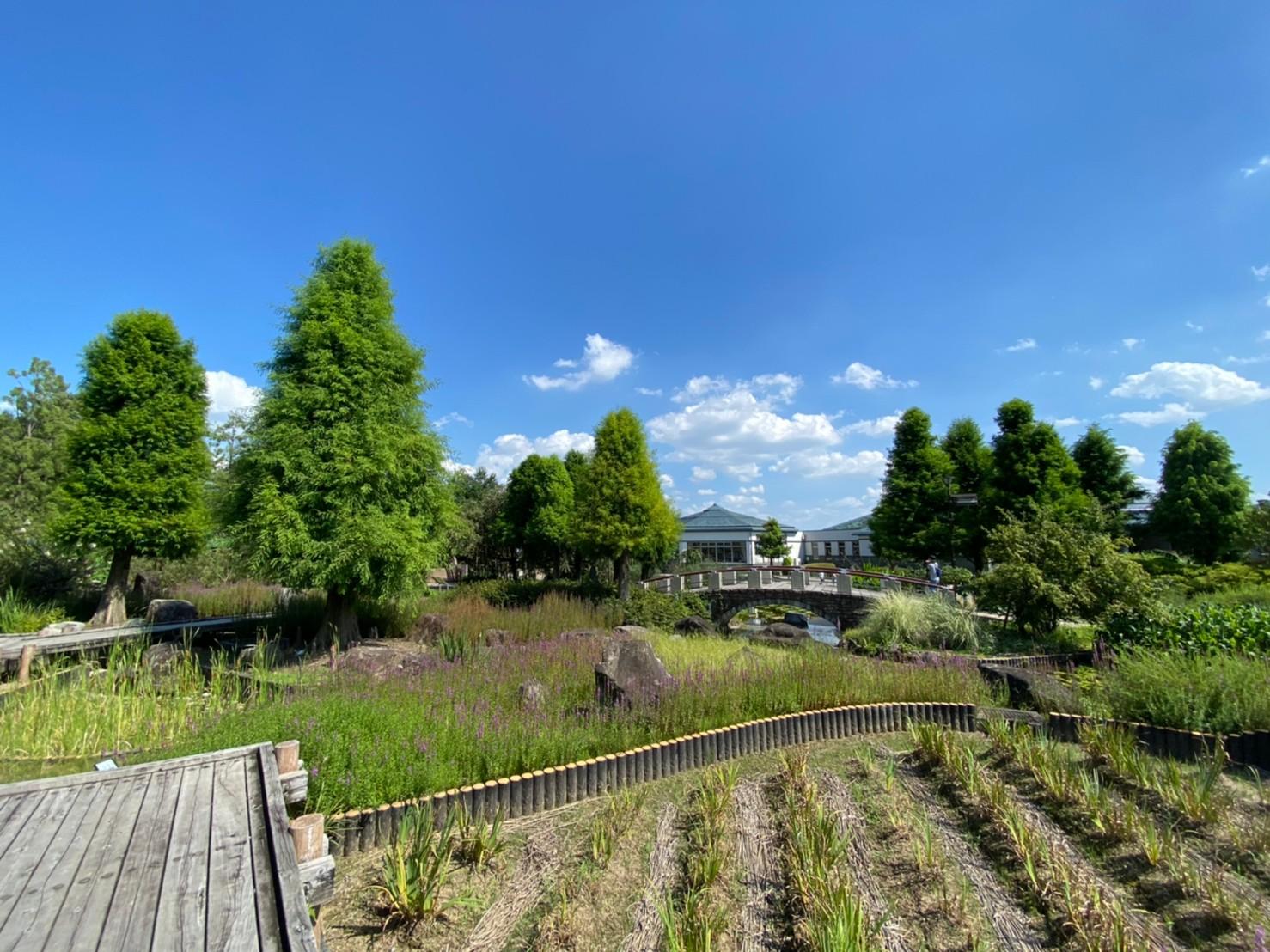 【草津市・烏丸半島】『水生植物公園みずの森』情報まとめ(駐車場・トイレ)