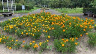 【野洲市】『近江富士花緑公園』のアウトドア情報(駐車場・トイレ)