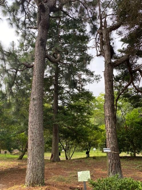 【野洲市】近江富士花緑公園のアウトドア情報(駐車場・トイレ)